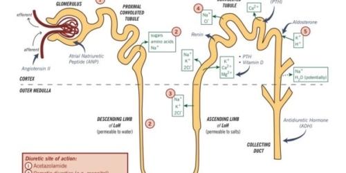 Furosemid – lek moczopędny czy kardiologiczny?