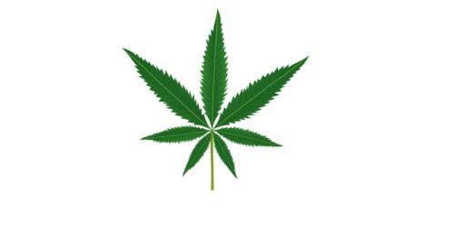 W Lublinie będą leczyć marihuaną