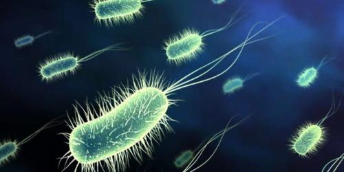 Salmonella i kwasowy atak makrofagów