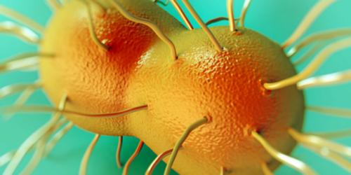 Lekooporność bakterii rzeżączki poważnym zagrożeniem