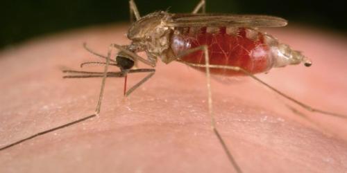 Czy doczekamy się szczepionki przeciwko malarii?