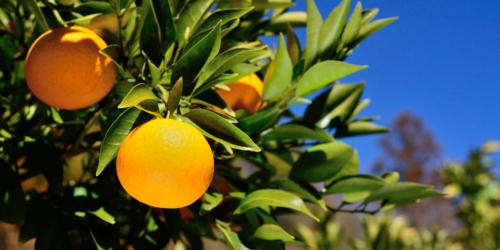 Ostrożnie z pomarańczą