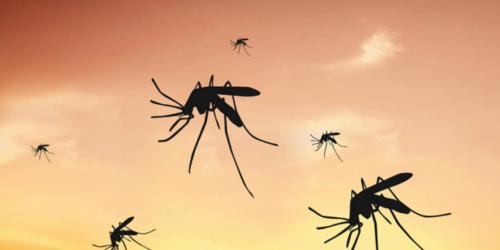 Magnes na komara