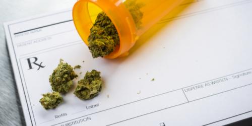 1,75 kg marihuany sprzedały na recepty czeskie apteki w ciągu pół roku