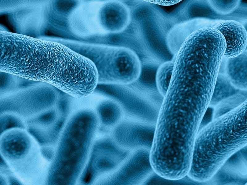 Lepiej wzbogacić swoją dietę w produkty, które są źródłem probiotyków, niż przyjmować ich suplementy (fot. Shutterstock)