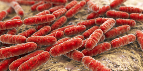 Probiotyki minimalizujące szkody spowodowane antybiotykoterapią