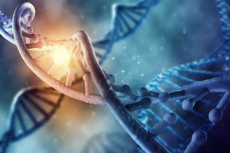 Badaczy nurtowało od dawna pytanie o ewolucję liczby genów MHC w genomie (fot. Shutterstock)