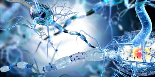 Immunologia mózgu a padaczka
