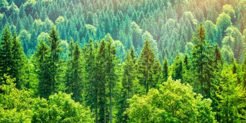 Obowiązki apteki wobec środowiska