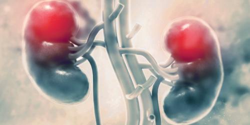 Rola kory nadnerczy w rozwoju narządów płciowych