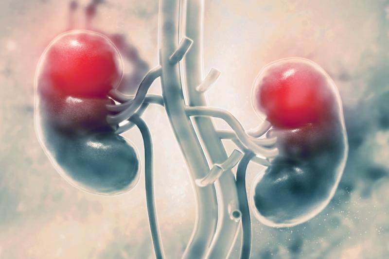 Europejscy naukowcy odkryli nową funkcję kory nadnerczy w rozwoju zewnętrznych narządów płciowych.