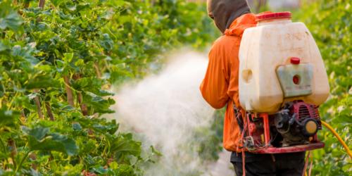 Pestycydy w żywności – ryzyko jest niskie