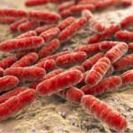 Środki dezynfekujące powodem antybiotykooporności bakterii