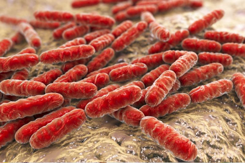 Zdjęcie szczepów bakterii w powiększeniu