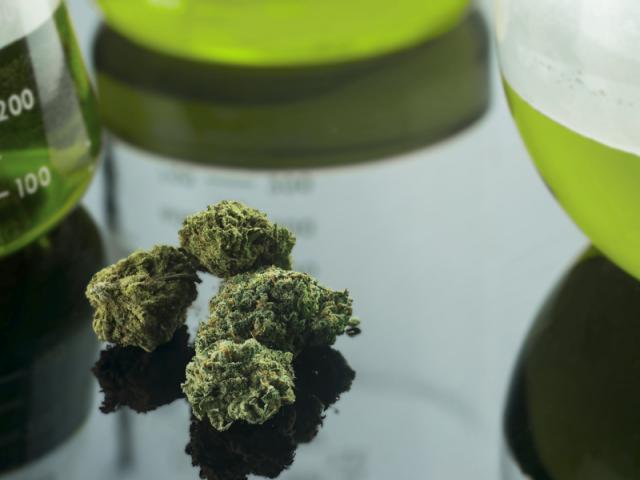 Marihuana leży na szklanym stole