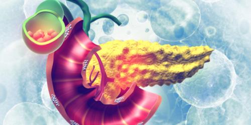 Nowe biomateriały umożliwią wytwarzanie wysepek trzustkowych z pojedynczych komórek