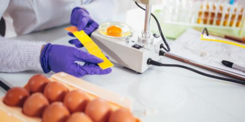 6 składników jaj, które można wykorzystać w lecznictwie