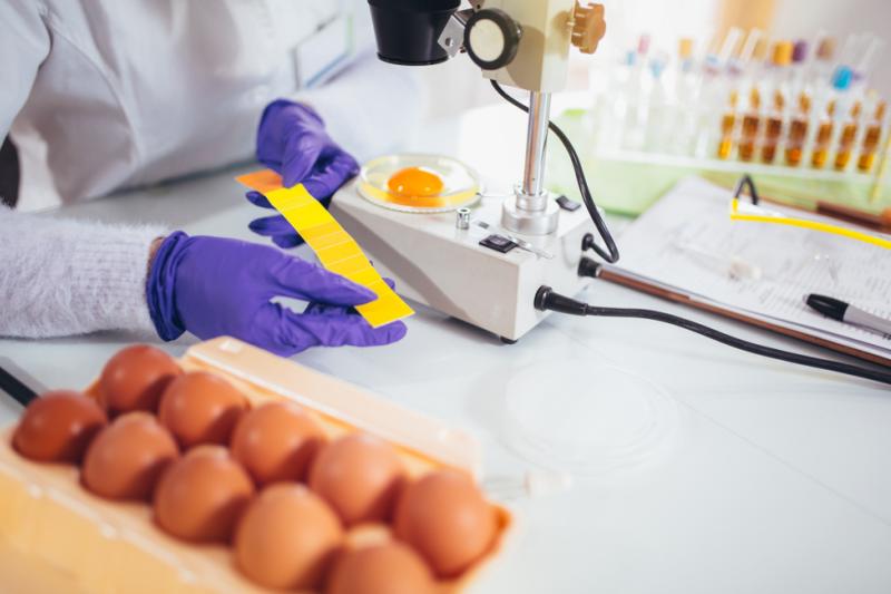 Budujące skorupkę sole wapnia mogłyby być najlepszym źródłem tego pierwiastka dla człowieka, cechującym się ponad 90% przyswajalnością. (fot. Shutterstock)