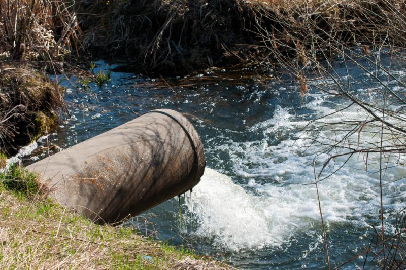 Dowody wskazują, że hormony estrogenne obecne w wodach nawet w niskich stężeniach mogą prowadzić do utraty przez nich płodności samców niektórych gatunków ryb (fot. Shutterstock).