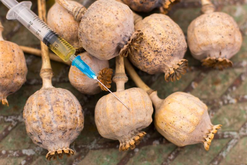Opiaty to substancje psychoaktywne pochodzące z opium - substancji otrzymywanej przez wysuszenie soku mlecznego z niedojrzałych makówek maku lekarskiego (fot. Shutterstock)