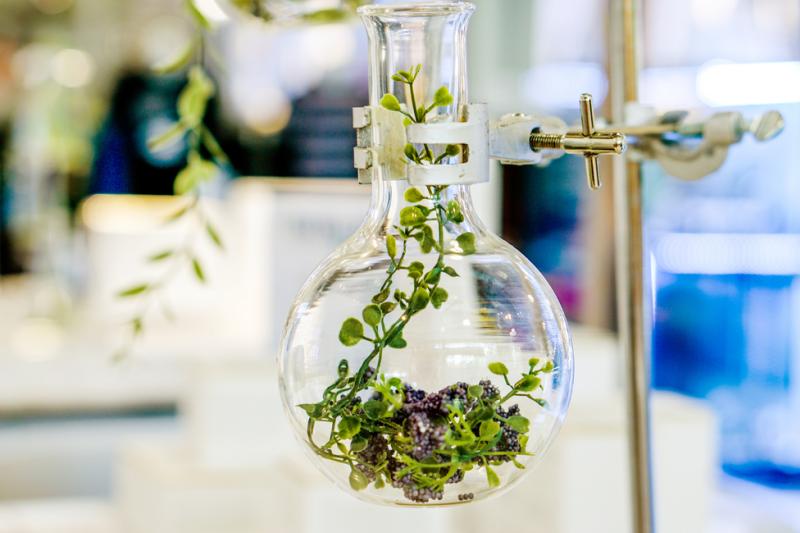Uszkodzenie miąższu wątroby, ogniskowe zwłóknienia - to tylko niektóre z długiej listy toksyczynych działań roślin, stosowanych dawniej w medycynie (fot. Shutterstock)