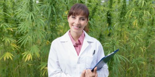 Lecznicza marihuana już niedługo w aptekach?