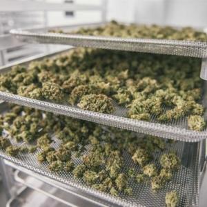 Medyczna marihuana tańsza, jeśli stawka VAT niższa