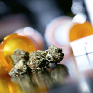 Nowy typ medycznej marihuany niedługo trafi do Polski