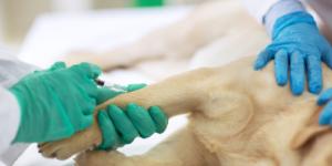 FDA chce ograniczyć testowanie leków na psach