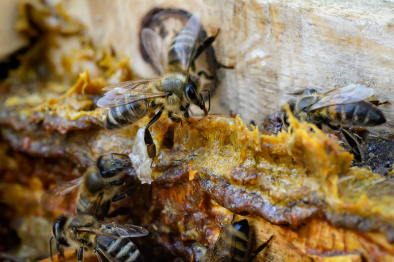 Produkty pszczele w skoncentrowanej formie, jako suplementy diety mogą być pomocne, ale takiemu postępowaniu powinna towarzyszyć zmiana diety, nawyków żywieniowych i odpowiednia jakość zdrowotna tego, co spożywamy (fot. Shutterstock)