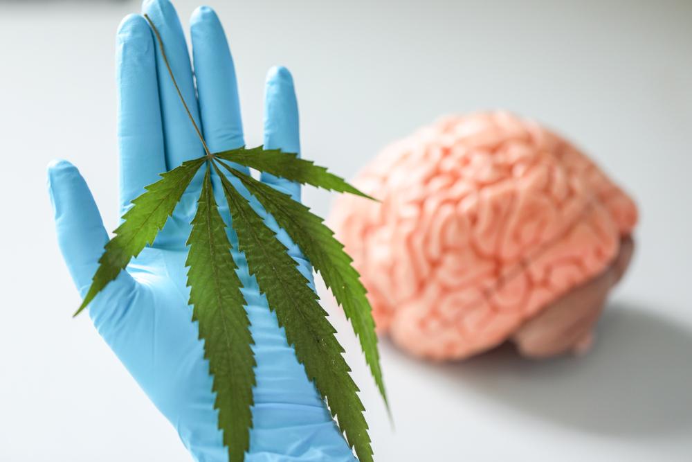 Badanie naukowców z Uniwersytetu w Michigan ujawniło również niebezpieczną tendencję. Pacjenci, którzy po zastosowaniu medycznej marihuany, odczuwali ulgę, decydowali się na odstawienie leków bez konsultacji z lekarzem (fot. Shutterstock)