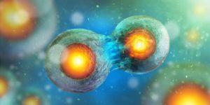 Naukowcy opracowują pierwszą dynamiczną mapę podziału ludzkich komórek