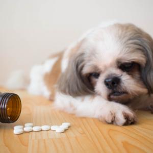 Pomagają ludziom, szkodzą zwierzętom. Jakich leków nie podawać czworonogom?