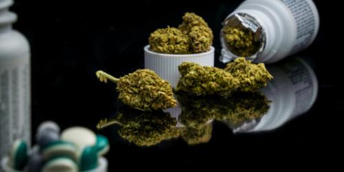 Farmaceuci boją się medycznej marihuany?