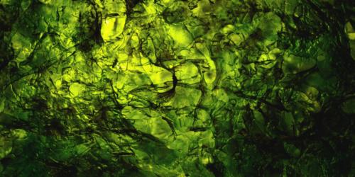 Naukowcy chcą wykorzystać okrzemki do produkcji trwałych opatrunków