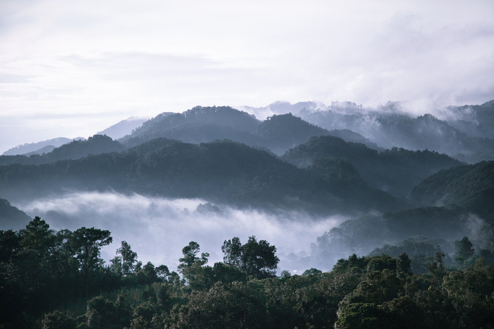 Międzynarodowy zespół naukowców związanych z Rutgers University odkrył antybiotyk wytwarzany przez bakterię glebową żyjącą w tropikalnych lasach Meksyku (fot. Shutterstock).