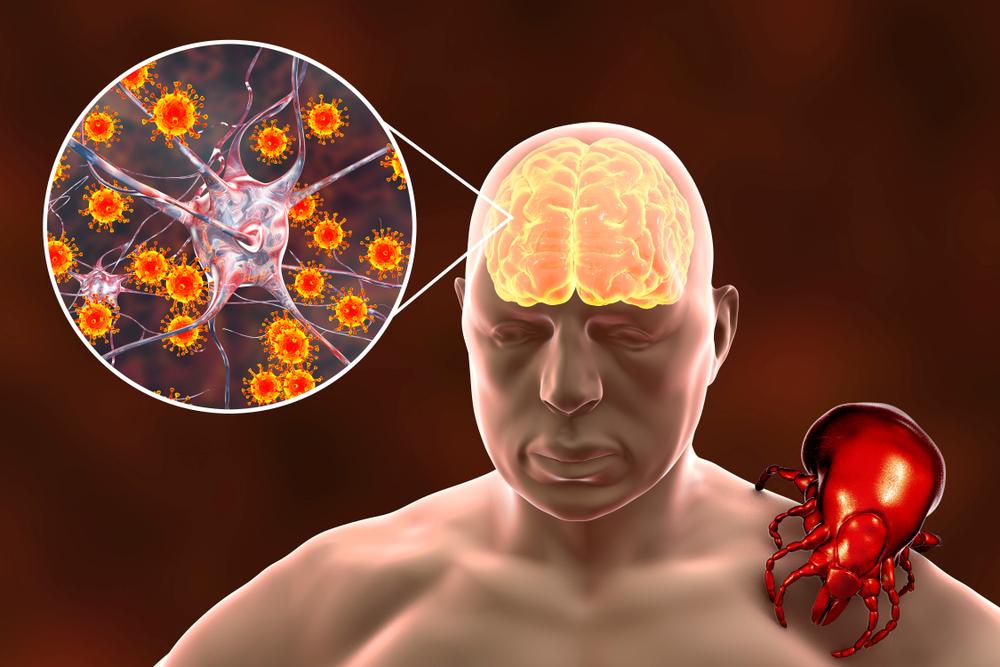 Szczepionki przeciwko kleszczowemu zapaleniu mózgu charakteryzują się wysoką skuteczności (fot. Shutterstock)