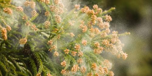 Skuteczne metody ograniczania narażenia na powszechnie występujące pyłki